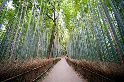 Bamboo_Baraty